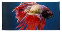 Beach Towel featuring the photograph Betta Fish 2 by Lisa Brandel