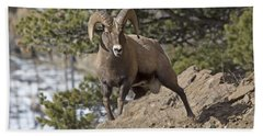Big Horn Ram Beach Towel