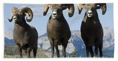 Big Horn Sheep Beach Towel by Bob Christopher