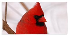 Big Red  Cardinal Bird In Snow Beach Towel by Peggy Franz