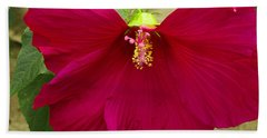 Beach Towel featuring the photograph Big Red Hibiscus Bloom by James C Thomas