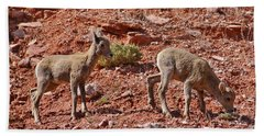 Beach Towel featuring the photograph Bighorn Canyon Sheep Wyoming by Janice Rae Pariza