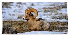 Beach Towel featuring the photograph Bighorn Sheep by Greg Norrell