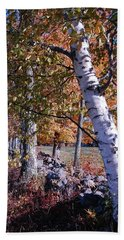 Beach Towel featuring the photograph Birches by Mim White