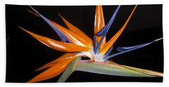 Bird Of Paradise Beauty 4 Beach Towel
