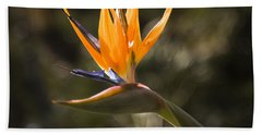 Bird Of Paradise Beach Towel by David Millenheft