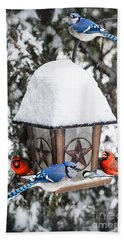 Birds On Bird Feeder In Winter Beach Sheet