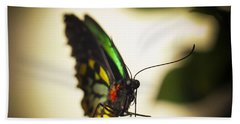 Birdwing Butterfly Beach Sheet by Bradley R Youngberg