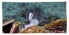 Beach Towel featuring the photograph Birth Of Marine Cuttlefish by Sergey Lukashin