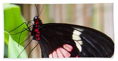 Black And Red Cattleheart Butterfly Beach Towel by Amy McDaniel