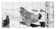 Black And White Rooster Beach Sheet by Denise Romano