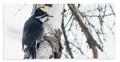 Black-backed Woodpecker Beach Towel