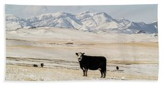 Black Baldy Cows Beach Towel