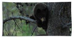 Black Bear Cub In Tree Beach Towel