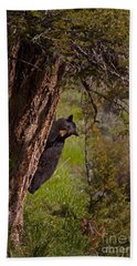 Beach Sheet featuring the photograph Black Bear In A Tree by J L Woody Wooden