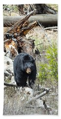 Black Bear Beach Sheet