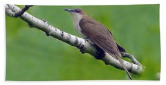 Black-billed Cuckoo Beach Towel