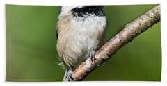 Black Capped Chickadee Beach Sheet