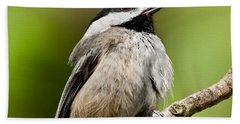 Black Capped Chickadee Singing Beach Sheet