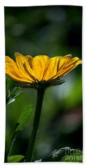 Black Eyed Susan Beach Towel by Sharon Elliott