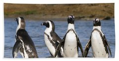 Black-footed Penguins On Beach Cape Beach Towel