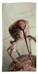 Black Oak Acorn Weevil Boring Into Acorn Beach Towel by Mark Moffett