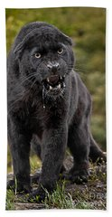 Black Panther Beach Towel by Jerry Fornarotto