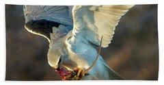 Black-shouldered Kite Elanus Axillaris Beach Towel