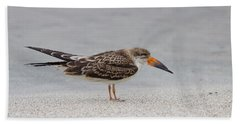 Black Skimmer Beach Sheet