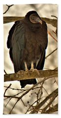 Black Vulture 1 Beach Towel