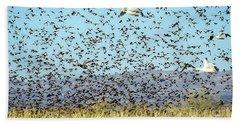 Blackbirds And Geese Beach Towel