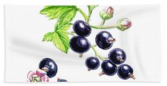 Blackcurrant Botanical Study Beach Towel by Irina Sztukowski