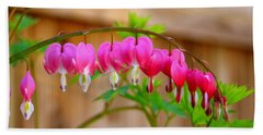 Beach Towel featuring the photograph Graceful Arch Of Bleeding Heart by Patti Whitten