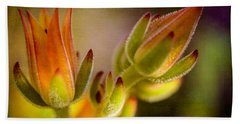 Blooming Succulents Iv Beach Towel