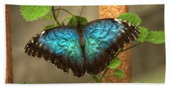Blue And Black Butterfly Beach Towel