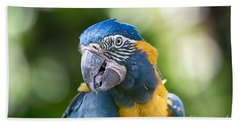 Blue And Gold Macaw V3 Beach Towel by Douglas Barnard