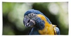 Blue And Gold Macaw V5 Beach Towel by Douglas Barnard