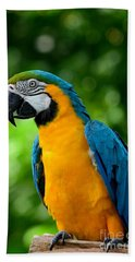 Blue And Yellow Gold Macaw Parrot Beach Towel