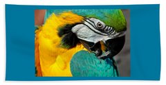 Blue And Yellow Macaw  Beach Sheet by Venetia Featherstone-Witty