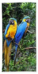 Blue And Yellow Macaws Beach Towel