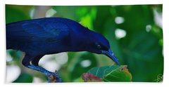 Blue-black Black Bird Beach Sheet by Susan Molnar