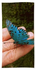 Blue Butterfly Beach Sheet by Paul  Wilford