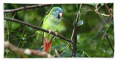 Blue Crowned Parakeet Beach Sheet by James Brunker