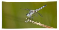 Beach Towel featuring the photograph Blue Dasher On The Edge by Bryan Keil