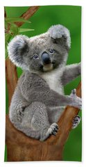 Blue-eyed Baby Koala Beach Towel