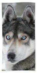 Blue Eyes Husky Dog Beach Sheet