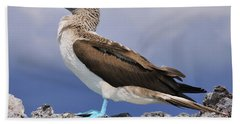 Blue-footed Booby Beach Towel by Tony Beck