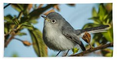 Blue-gray Gnatcatcher Beach Sheet by Jane Luxton