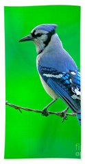 Blue Jay On The Fence Beach Towel by Robert Frederick