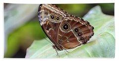 Blue Morpho Butterfly Beach Sheet by Teresa Zieba